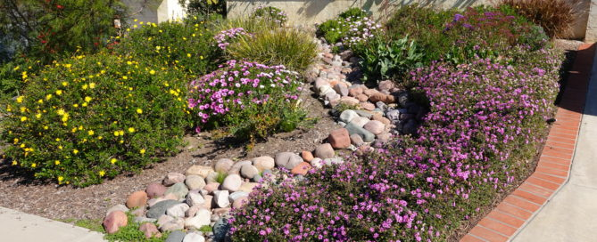 Why You Should Consider Installing Native Plants