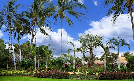 Great South Florida Landscaping Ideas You Will Love