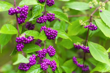 Should You Include Non-Native Flowers and Shrubs in Your Landscape?